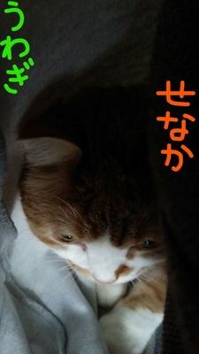 Inked1521357344584[76]_LI.jpg